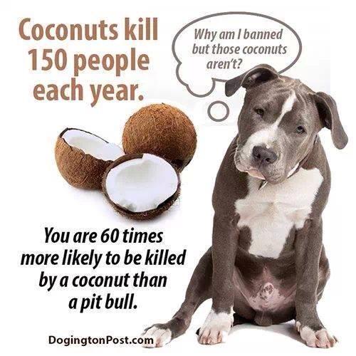 DSV_wistudat_Coconuts Kill